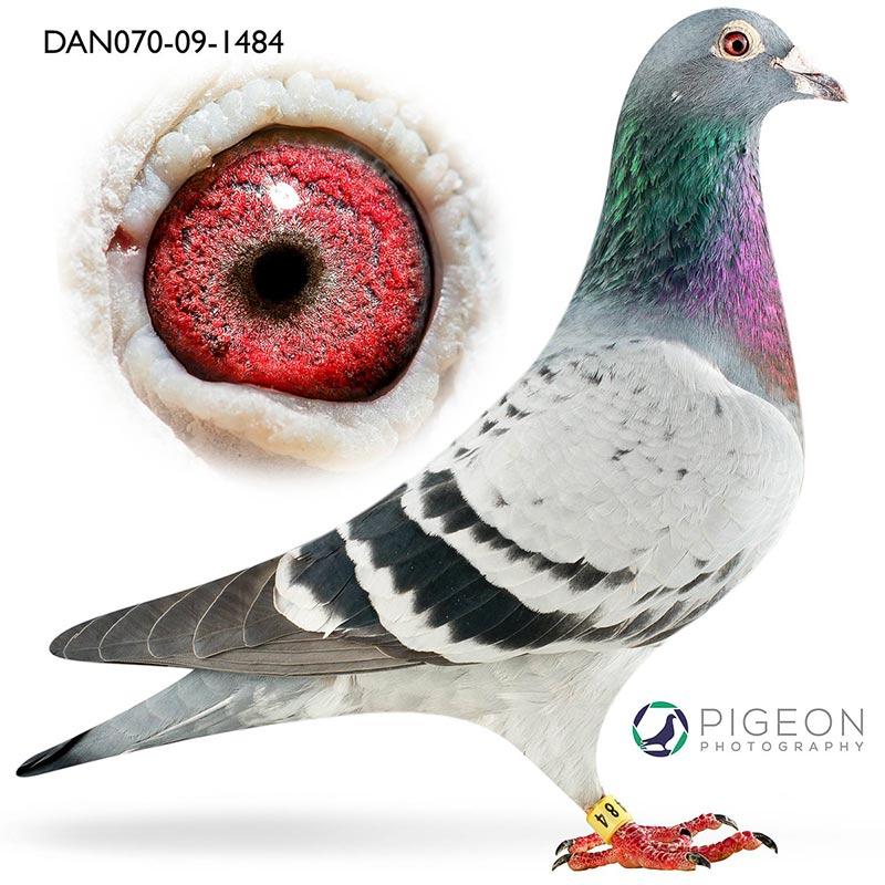 DAN070-09-1484