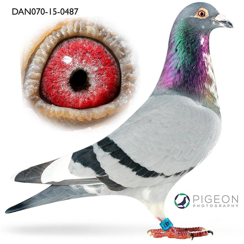 DAN070-15-0487